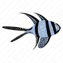 Banggai Cardinal Fish icon