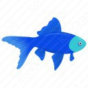 Acei Cichlid Fish icon