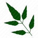 3 Leaves set icon