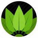 five leaves icon